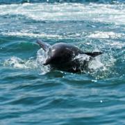 Wilde dolfijnen!