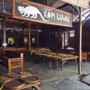 Kopi Luwak, Yogjakarta