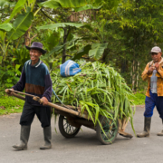 Theeplantage Malang