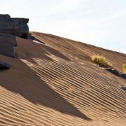 42. Sahara